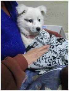 山口県の方針は野良犬は子犬も今まで全匹殺処分されましたが今回助けられた犬たち&モーおばあちゃん008