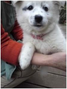 山口県の方針は野良犬は子犬も今まで全匹殺処分されましたが今回助けられた犬たち&モーおばあちゃん009