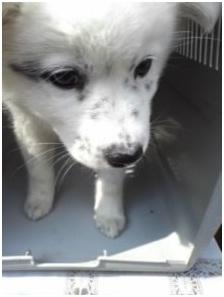山口県の方針は野良犬は子犬も今まで全匹殺処分されましたが今回助けられた犬たち&モーおばあちゃん010