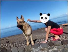 山口県の方針は野良犬は子犬も今まで全匹殺処分されましたが今回助けられた犬たち&モーおばあちゃん012