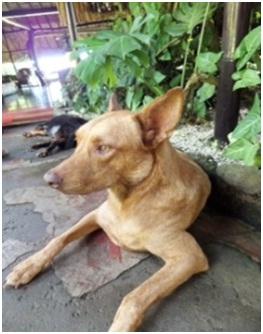 山口県の方針は野良犬は子犬も今まで全匹殺処分されましたが今回助けられた犬たち&モーおばあちゃん013