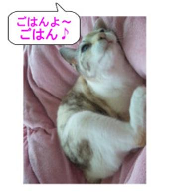山口県の方針は野良犬は子犬も今まで全匹殺処分されましたが今回助けられた犬たち&モーおばあちゃん016