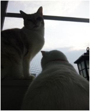 犬達のSOS金星と木星が大接近不思議な流れ星と海・姫ちゃんモーちゃん写真集携帯カメラマンミーママ003