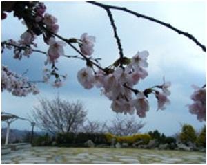 犬達のSOS・幻想的な桜夜に白鳥とサギ&ブータン国王と国民の真の優しさ・日本では祓い清めの春の嵐001