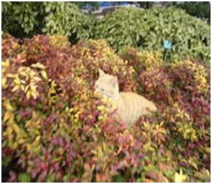 犬達のSOS・幻想的な桜夜に白鳥とサギ&ブータン国王と国民の真の優しさ・日本では祓い清めの春の嵐007