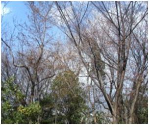 犬達のSOS・幻想的な桜夜に白鳥とサギ&ブータン国王と国民の真の優しさ・日本では祓い清めの春の嵐010