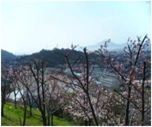 犬達のSOS・幻想的な桜夜に白鳥とサギ&ブータン国王と国民の真の優しさ・日本では祓い清めの春の嵐011