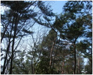 犬達のSOS・幻想的な桜夜に白鳥とサギ&ブータン国王と国民の真の優しさ・日本では祓い清めの春の嵐012