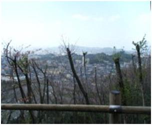 犬達のSOS・幻想的な桜夜に白鳥とサギ&ブータン国王と国民の真の優しさ・日本では祓い清めの春の嵐013