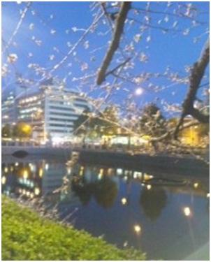 犬達のSOS・幻想的な桜夜に白鳥とサギ&ブータン国王と国民の真の優しさ・日本では祓い清めの春の嵐017