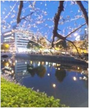 犬達のSOS・幻想的な桜夜に白鳥とサギ&ブータン国王と国民の真の優しさ・日本では祓い清めの春の嵐018