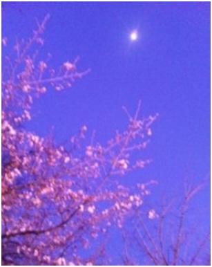 犬達のSOS・幻想的な桜夜に白鳥とサギ&ブータン国王と国民の真の優しさ・日本では祓い清めの春の嵐019