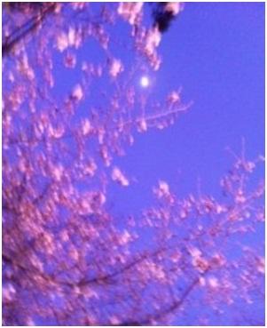 犬達のSOS・幻想的な桜夜に白鳥とサギ&ブータン国王と国民の真の優しさ・日本では祓い清めの春の嵐020