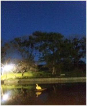 犬達のSOS・幻想的な桜夜に白鳥とサギ&ブータン国王と国民の真の優しさ・日本では祓い清めの春の嵐022