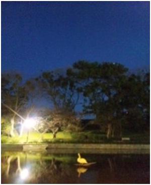 犬達のSOS・幻想的な桜夜に白鳥とサギ&ブータン国王と国民の真の優しさ・日本では祓い清めの春の嵐023