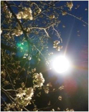 犬達のSOS・幻想的な桜夜に白鳥とサギ&ブータン国王と国民の真の優しさ・日本では祓い清めの春の嵐024
