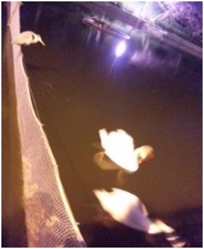 犬達のSOS・幻想的な桜夜に白鳥とサギ&ブータン国王と国民の真の優しさ・日本では祓い清めの春の嵐026