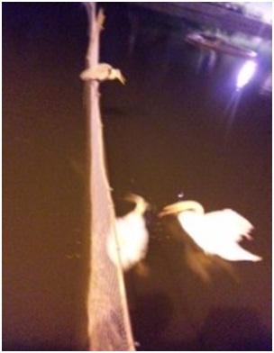 犬達のSOS・幻想的な桜夜に白鳥とサギ&ブータン国王と国民の真の優しさ・日本では祓い清めの春の嵐027