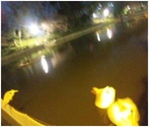 犬達のSOS・幻想的な桜夜に白鳥とサギ&ブータン国王と国民の真の優しさ・日本では祓い清めの春の嵐028