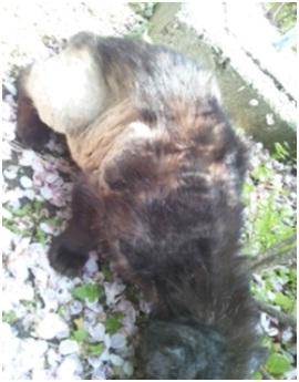 愛媛県庁の動物愛護推進計画に携わっておられるkさんへ、お礼とお詫び・犬達のSOS002