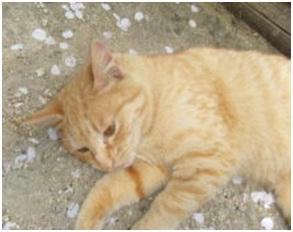 愛媛県庁の動物愛護推進計画に携わっておられるkさんへ、お礼とお詫び・犬達のSOS012