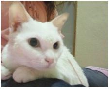 犬達のSOSこのままだと危ない!猫虐待エリアに捨てられていた天使のような白猫(マルル)を無事保護002