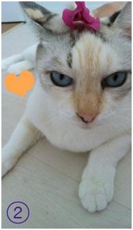 犬達のSOSこのままだと危ない!猫虐待エリアに捨てられていた天使のような白猫(マルル)を無事保護006