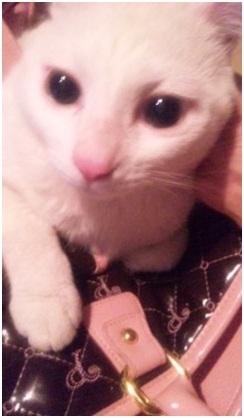 犬達のSOSこのままだと危ない!猫虐待エリアに捨てられていた天使のような白猫(マルル)を無事保護009