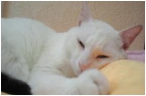 犬達のSOSこのままだと危ない!猫虐待エリアに捨てられていた天使のような白猫(マルル)を無事保護014