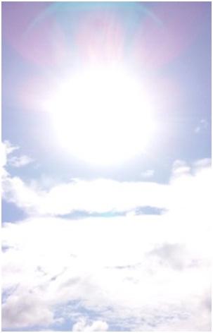 犬達のSOS・猫虐待多発の松山総合公園管轄の松山保健所木村獣医さんへアグネスより001