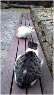 犬達のSOS・猫虐待多発の松山総合公園管轄の松山保健所木村獣医さんへアグネスより004