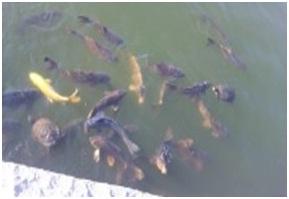 犬達のSOS・猫虐待多発の松山総合公園管轄の松山保健所木村獣医さんへアグネスより006