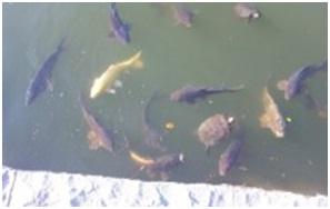 犬達のSOS・猫虐待多発の松山総合公園管轄の松山保健所木村獣医さんへアグネスより007