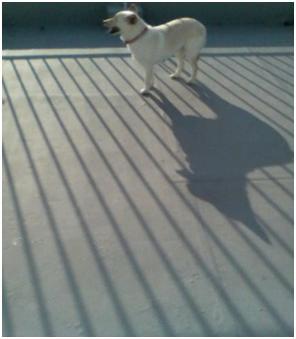 犬達のSOS『毒ガス室前日に救出の姫ちゃん日記⑤ミーママ昨夜は3時間も眠れましたo(^-^)』005