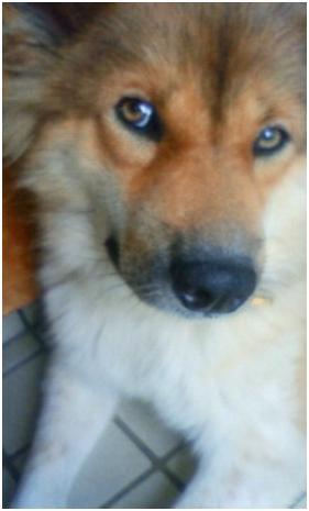 東温市犬達のSOS、背骨とシッポが変形しているワサビ君と毒ガス室殺処分前日に助けられた姫ちゃん⑧018