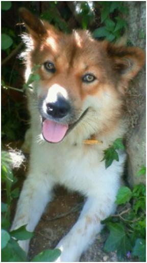 東温市犬達のSOS、背骨とシッポが変形しているワサビ君と毒ガス室殺処分前日に助けられた姫ちゃん⑧027