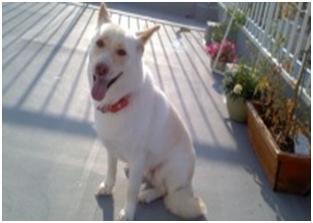 東温市犬達のSOS、背骨とシッポが変形しているワサビ君と毒ガス室殺処分前日に助けられた姫ちゃん⑧032