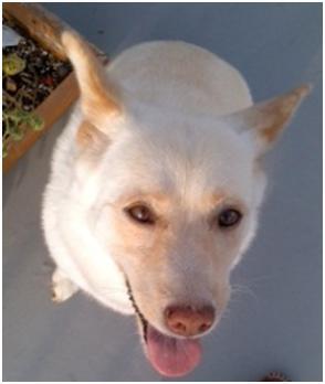 東温市犬達のSOS、背骨とシッポが変形しているワサビ君と毒ガス室殺処分前日に助けられた姫ちゃん⑧033