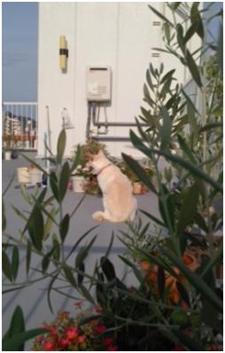 犬たちのSOS公務員の致死量睡眠薬餌の生き残り姫ちゃんは毒ガス窒息死処分前日に助けられここに⑨011