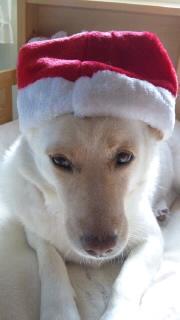 姫ちゃんクリスマス01