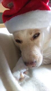姫ちゃんクリスマス02