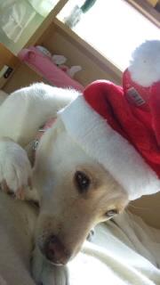 姫ちゃんクリスマス04