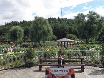 ダリヤ園1
