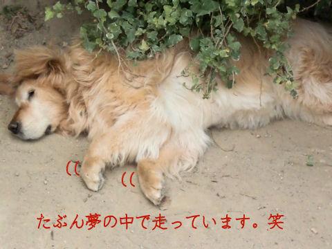 タロウ寝ています