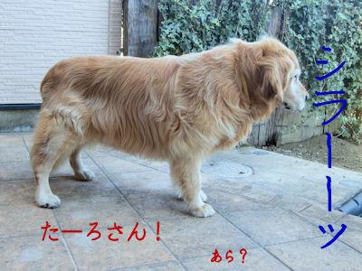 飼い主の問いかけに無視する犬。いい度胸だ。