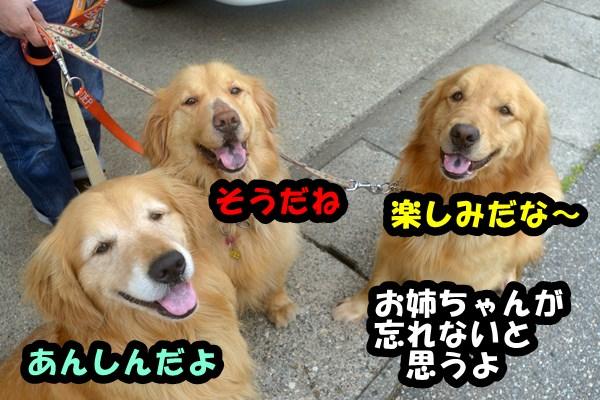DSC_0911_20130529000545.jpg