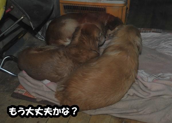 DSC_5533_20121226225555.jpg
