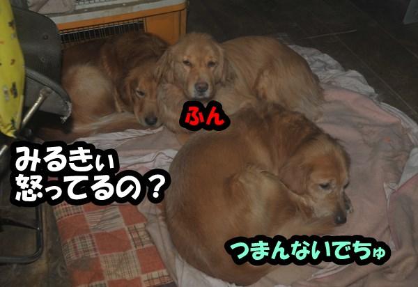 DSC_5597.jpg