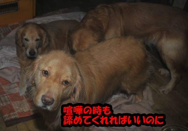 DSC_5615.jpg