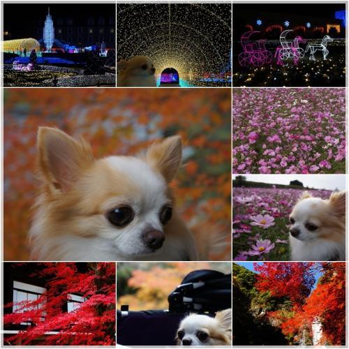 11_convert_20121229215702.jpg